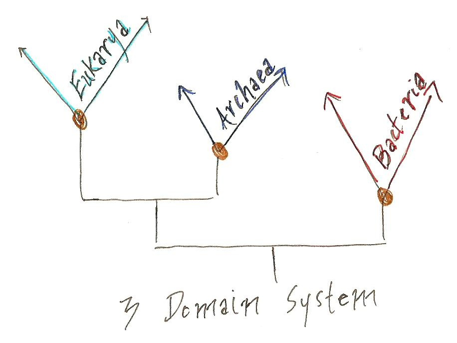 the 3 domains of development